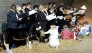 Christmas Story & Carols (Choir, children, angel and donkey!)